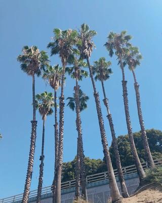 【g公式】少女時代_出身ティファニー、SNS更新。「good day in LA。rehearsals」。