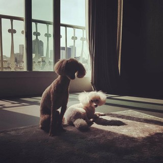 【g公式】女優カン・ソラ、 Gomi&Minkyの写真を公開。