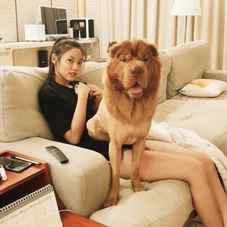 【g公式】AOA_ソリョン_Sulhyun、愛犬と一緒に過ごす日曜日を公開。