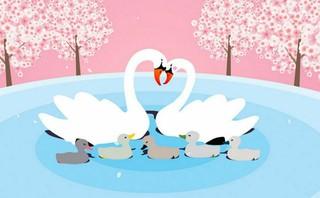 今週土曜(4月1日)ソウル・石村湖に白鳥カップルが現れる?!