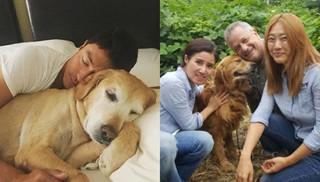 俳優ダニエル・ヘニーに新しい家族が!韓国の犬農場から新たにレトリバーを救助。