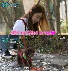 女優ユン・ウネ、愛犬キップミと初めてのお散歩♪愛犬カフェで新しい自分を発見!?