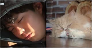 「ヒョリの民泊2」、俳優パク・ボゴムもゆったりとお昼寝タイム♪