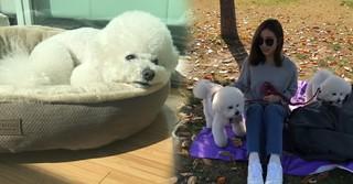 女優シン・セギョン、愛犬2匹との暮らしが愛らしい♪